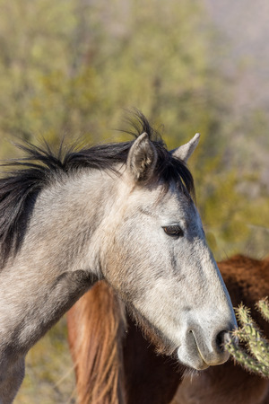 Wild Horse Close Up Portrait