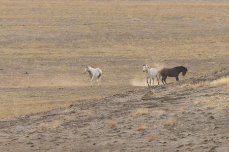 Wild Horses Interacting