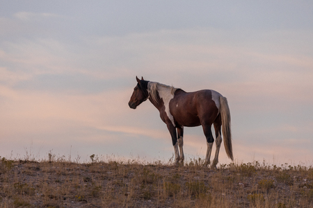 Wild Horse in the Sunset