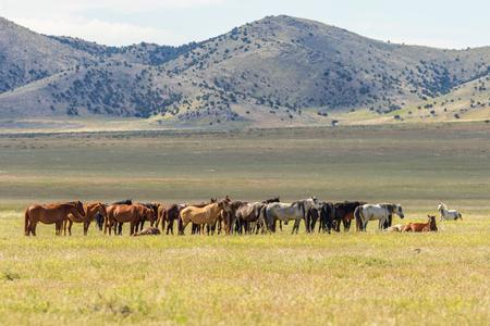 Herd of Wild Horses Фото со стока - 103083872
