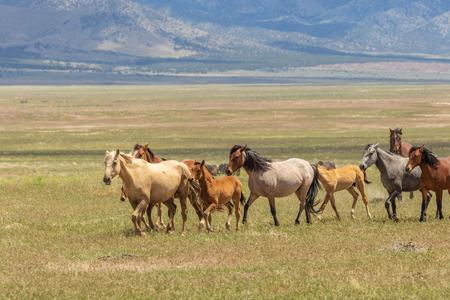 Herd of Wild Horses Stok Fotoğraf