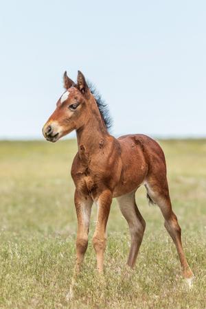 Poulain cheval sauvage mignon Banque d'images