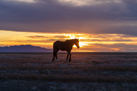 Wild Horse Silhouetted at Sunset 免版税图像