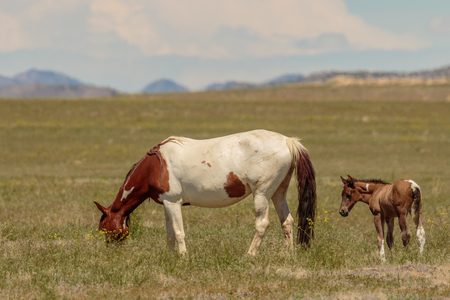 Wild Horse Mare and Foal 免版税图像