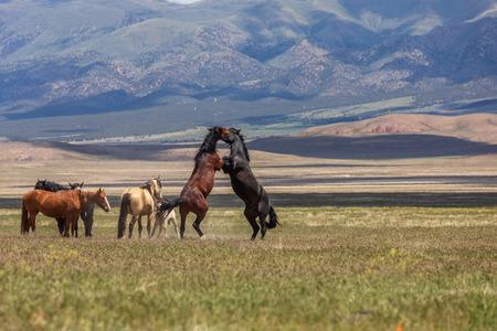 Wild Horses Fighting Stock Photo - 105750871