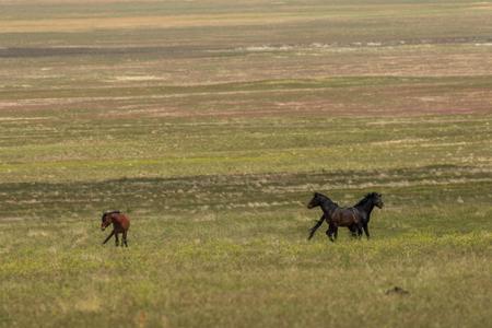 Herd of Wild Horses in Utah