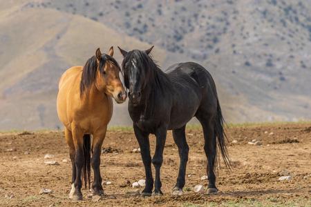 Wild horses in the Desert in Summer