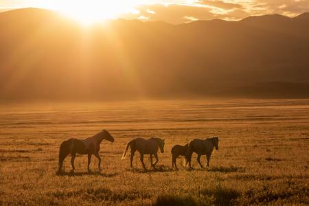 Wild horses at Sunrise