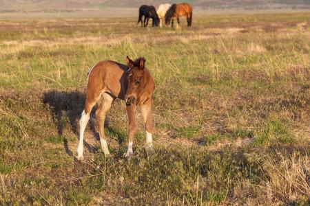 Wild Horse Foal Фото со стока