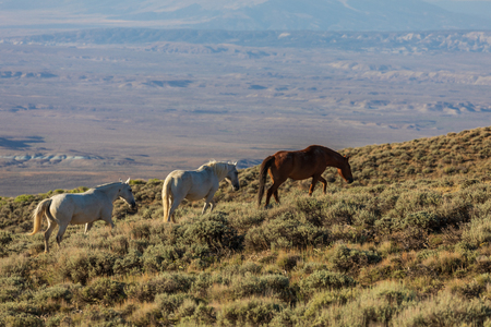 Wild Horses in Summer