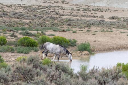 Wild Horse at Waterhole Фото со стока