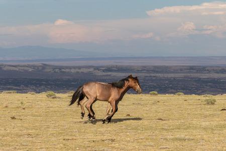 Pair of Wild Horses