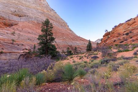 Zion National Park Utah Landscape Imagens