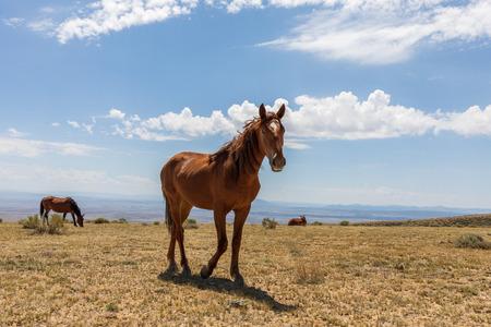 Wild Horse in the High Desert Фото со стока