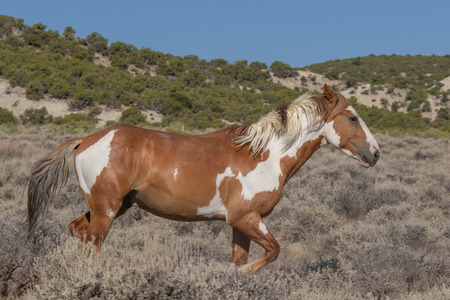 Wild horse in the High Desert