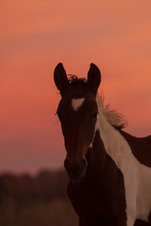 Wild horse Portrait  at Sunset