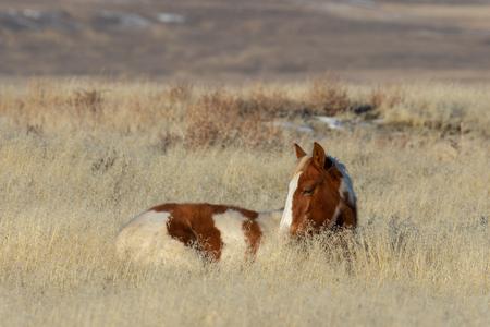 Wild Horse Foal 스톡 콘텐츠
