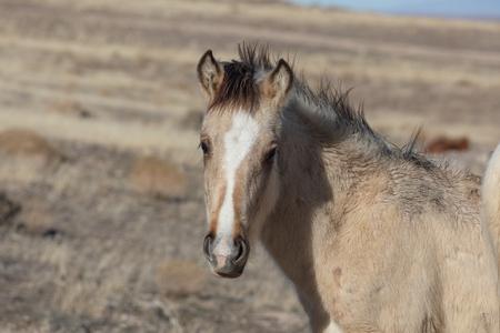 Beautiful Wild Horse in Winter