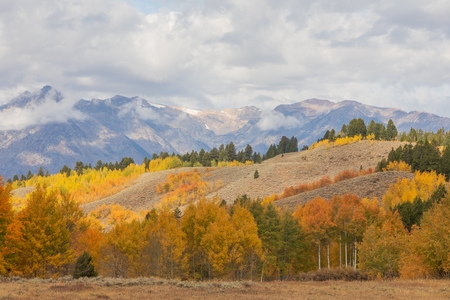 Scenic Autumn Landscape in the Tetons