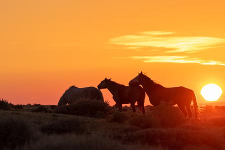 Wild Horses at Sunrise in the High Desert