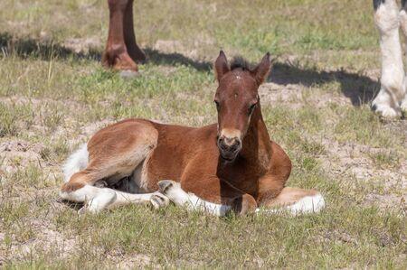Poulain cheval sauvage mignon