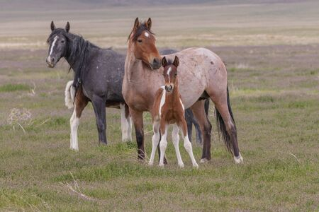 Wild Horse Mare and Foal Reklamní fotografie