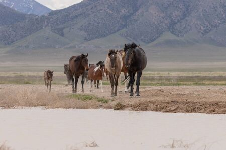 Wild Horses in the Utah Desert 写真素材 - 132124082