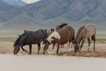 Wild Horses at a Desert Waterhole