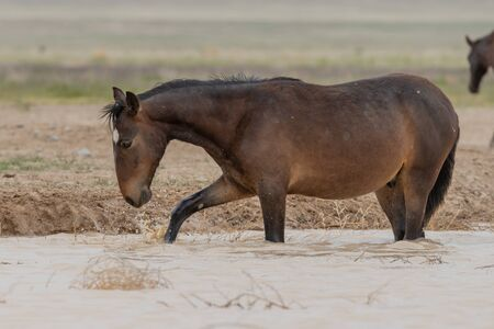 Wild Horses at a Desert Waterhole 写真素材 - 132124027