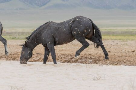 Wild Horse at a Desert Waterhole