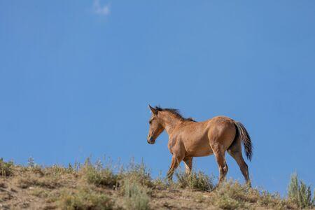 Wild Horse in the Colorado High Desert