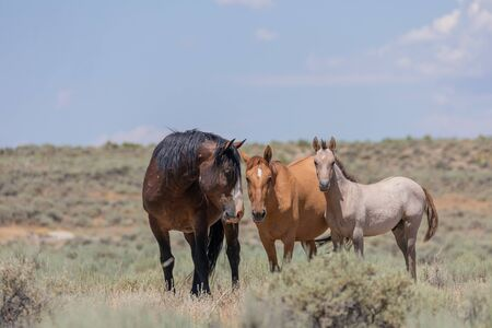 Wild Horses in the Sand Wash Basin Colorado