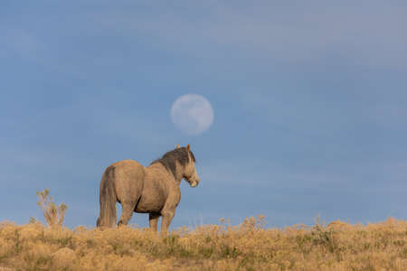 Wild Horse in the Utah Desert and Full Moon Rising