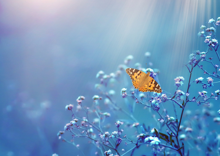 Butterfly in Natural background Imagens