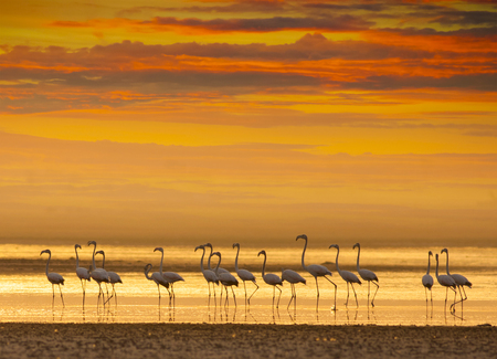 Flamingos at Sunset in a Lagoon Imagens