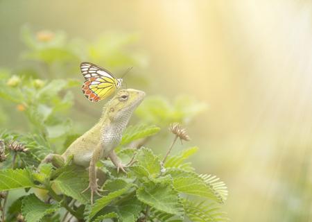 Butterfly on Oriental garden lizard in the garden Imagens - 106334801