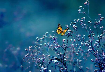 Beau papillon sur fleur Banque d'images