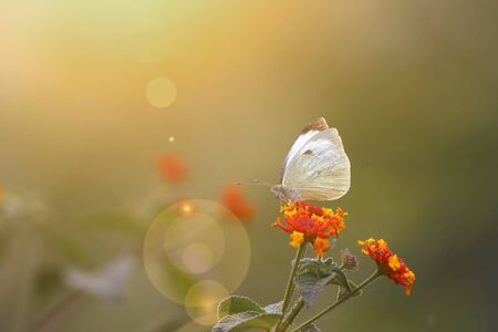 Butterfly on flower at sunrise