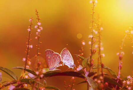 Butterfly Matting at sunset