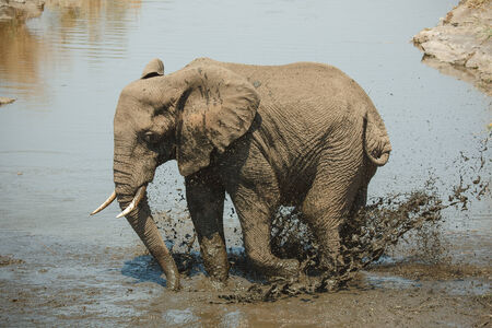 Elephant takes a bath in Kruger National Park