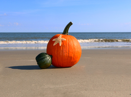Pumpkin on a beach 版權商用圖片 - 49007354