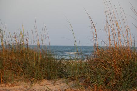 Beach Grass 版權商用圖片