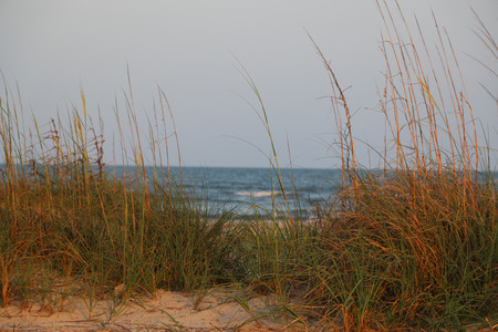 Beach Grass Stockfoto