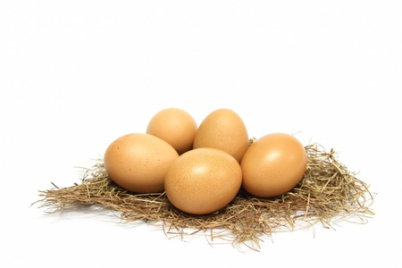 Eggs on nest photo