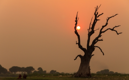 Single tree dying and the sunset photo