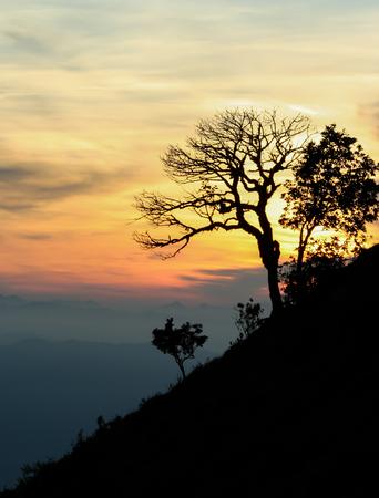 die tree Stock Photo - 22224957