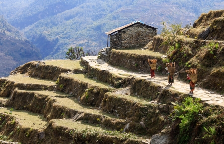 rice terrace , Nepal
