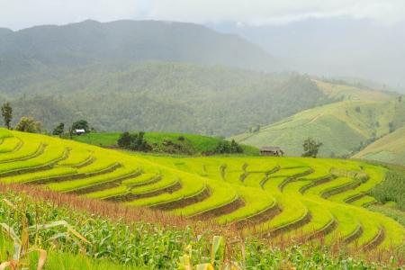 rizs terasz hegyen