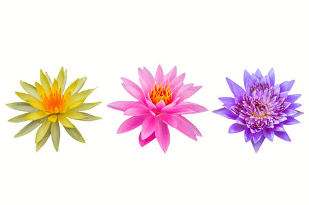 colorful of water lily on white background photo