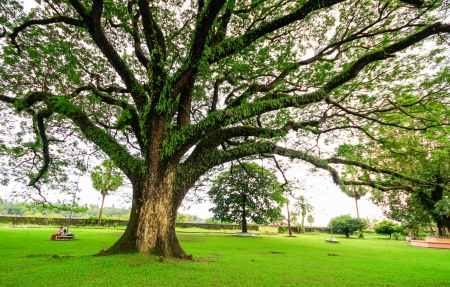 big tree: freshness tree after raining